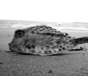 als-een-vis-op-het-droge-262645
